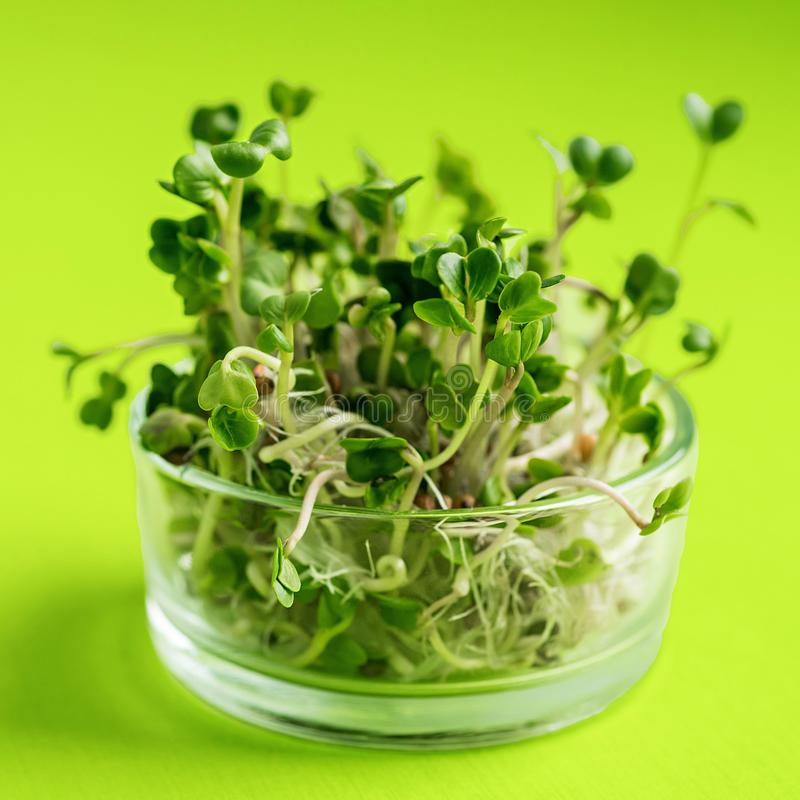 Green vegetables concept. micro greens on green background stock photography