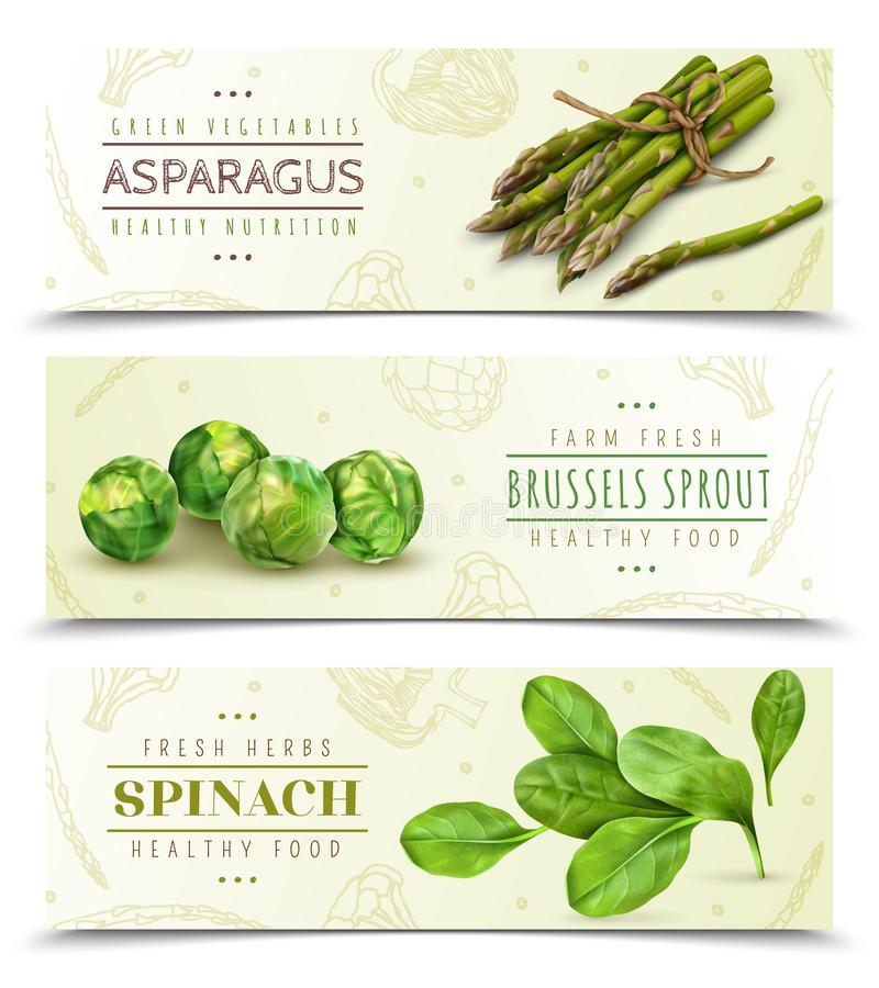 Green Vegetables Realistic Banners. Farm fresh green leafy vegetables 3 realistic horizontal banners set with spinach asparagus brussels sprouts vector vector illustration
