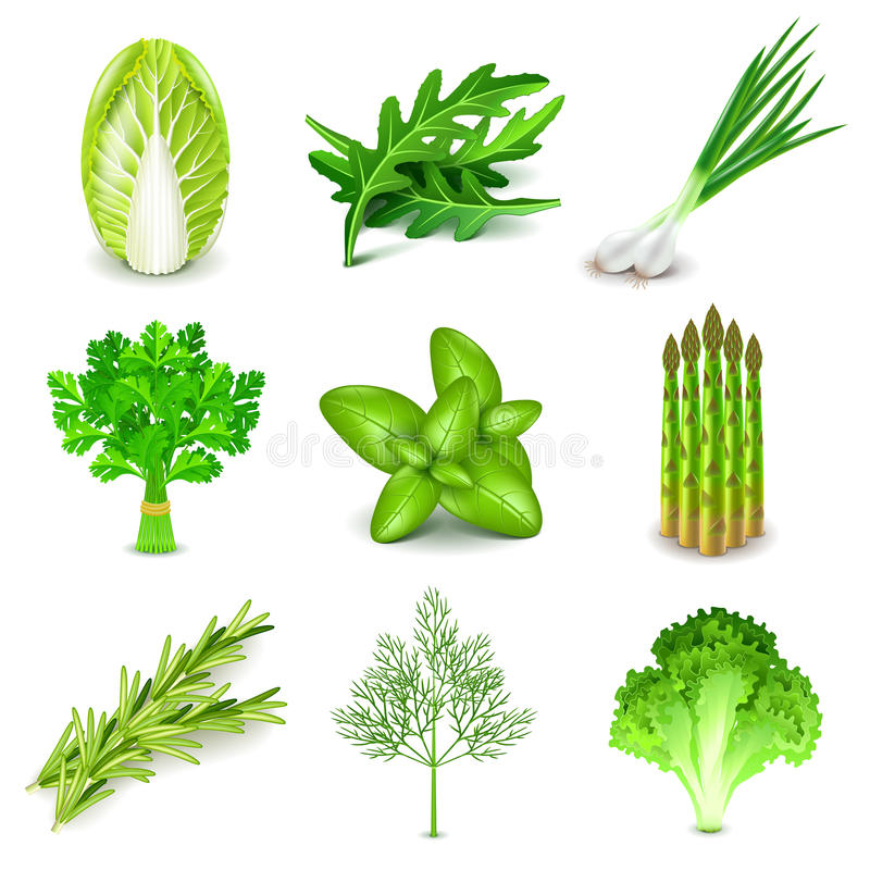 Green vegetables and spices icons vector set. Green vegetables and spices icons detailed photo realistic vector set stock illustration