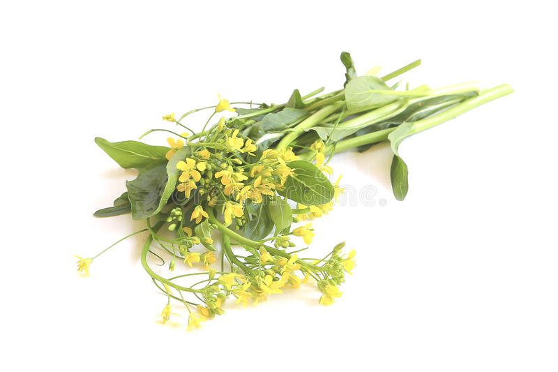 Green vegetables with yellow flowers stock image image of chinese download green vegetables with yellow flowers stock image image of chinese refreshment 36717069 mightylinksfo