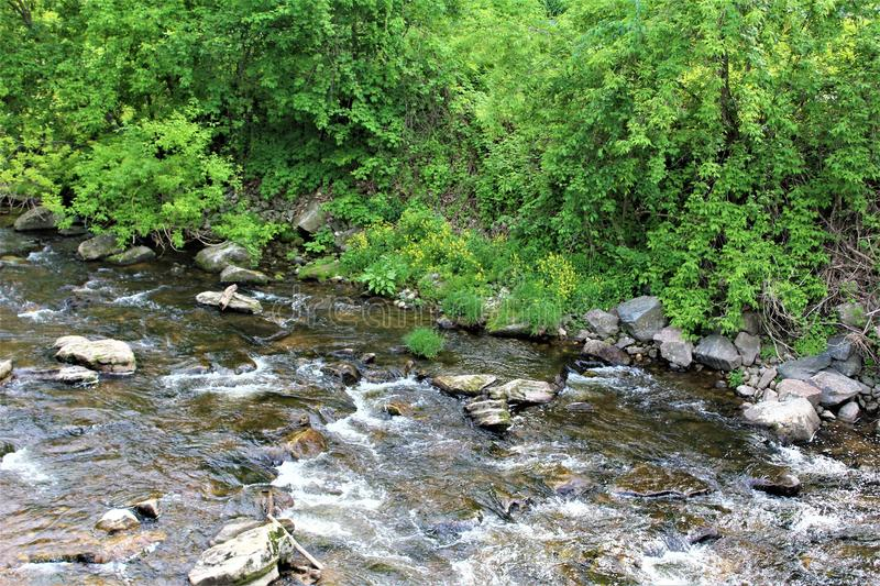 Trout River Stream, Franklin County, Malone, New York, United States. Green vegetation covered Trout River Stream, located in Franklin County, Malone, New York royalty free stock images