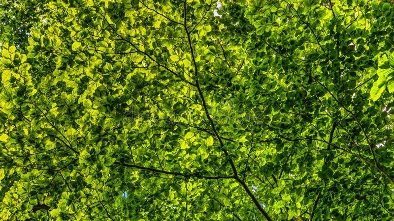 Green, Vegetation, Ecosystem, Tree stock photos