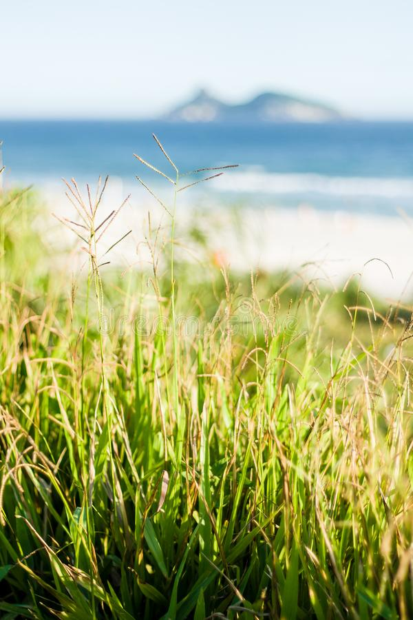 Green vegetation grass in front of beach stock images