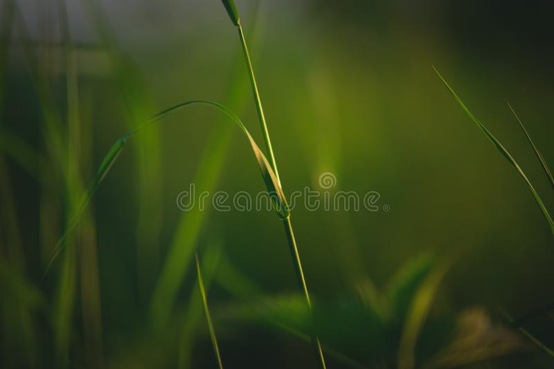 Green, Vegetation, Grass, Water royalty free stock image