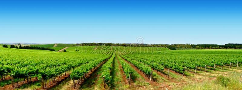 Download Green Vineyard Landscape stock photo. Image of vines, tourism - 3748542
