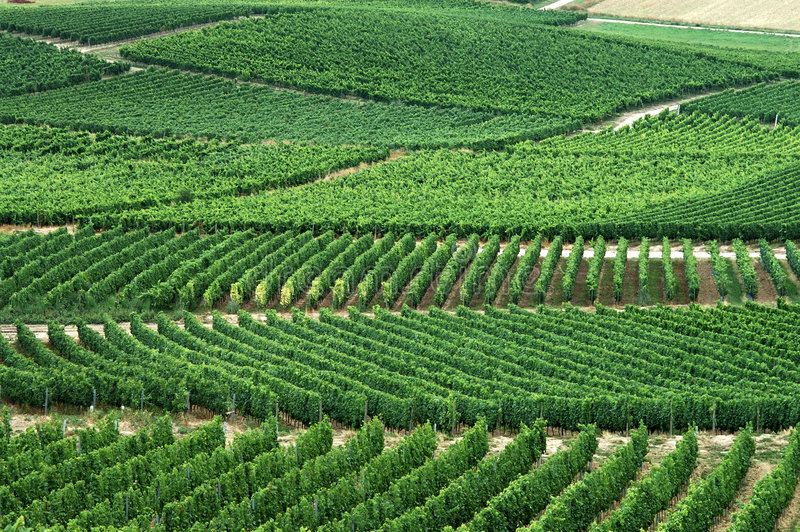 Download Green vineyards stock image. Image of lines, industry, wine - 271201
