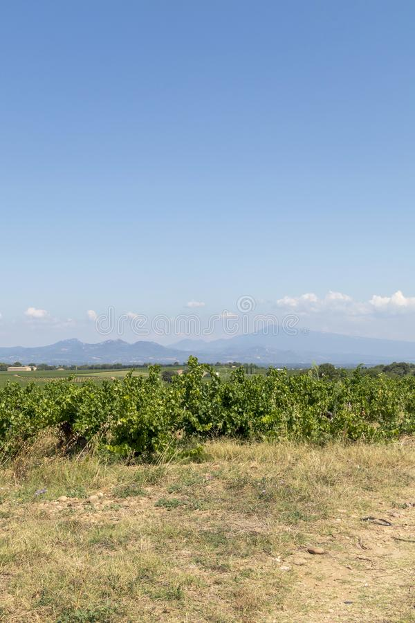 Mont Ventoux mountain and Dentelles de Montmirail chain of mountains with green wine fields of Provence, France. Green vineyards of French wine-producing region royalty free stock photo