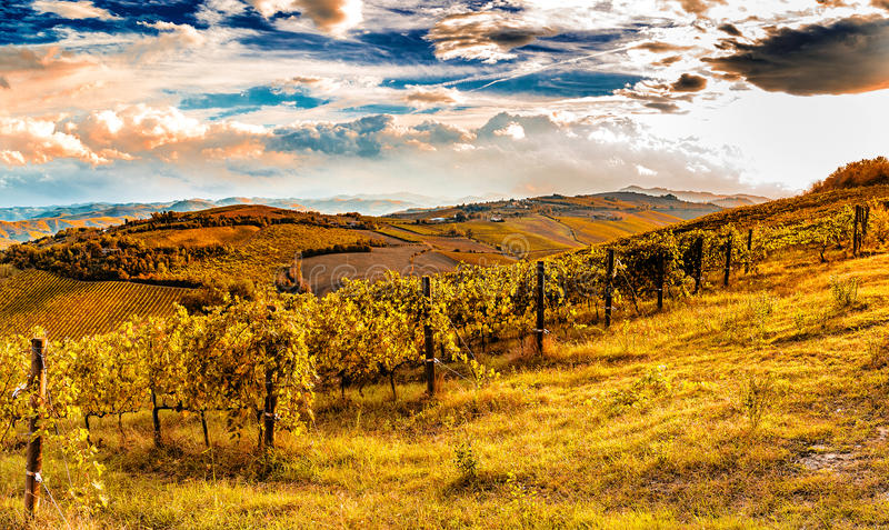Green vineyards of Italian hills royalty free stock image