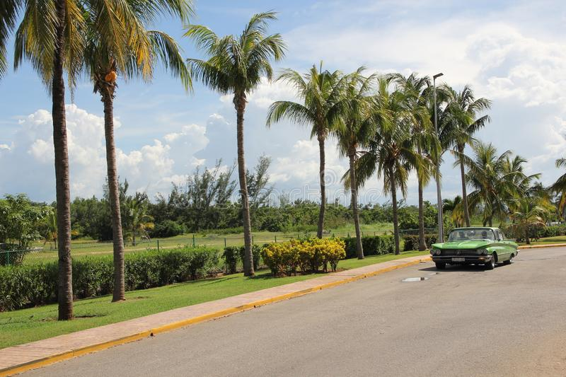Green vintage American car rides along a row of tall palm trees stock photo