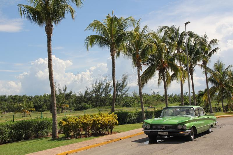 Green vintage American car rides along a row of tall palm trees royalty free stock image