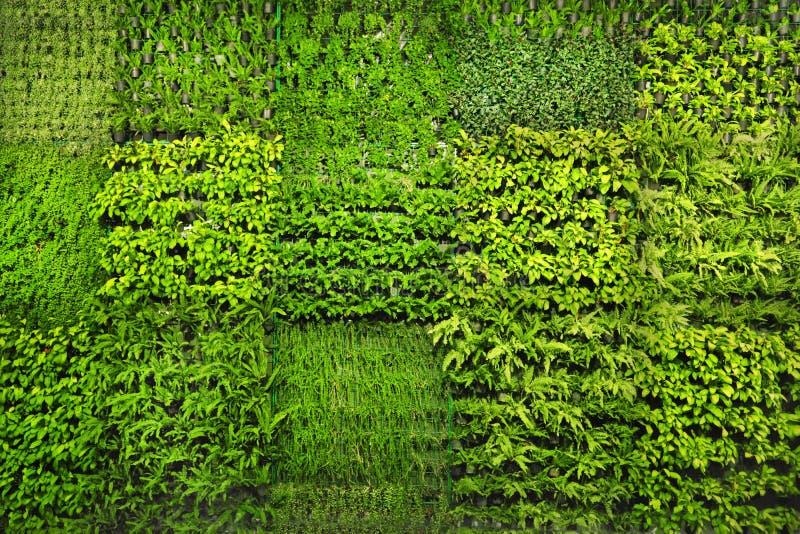 Green wall royalty free stock photo