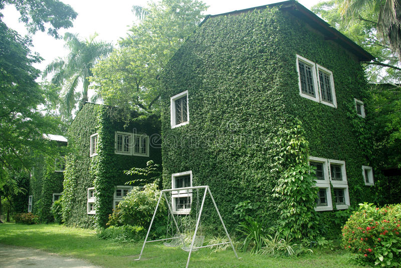 Green wall on building. Exterior stock photo