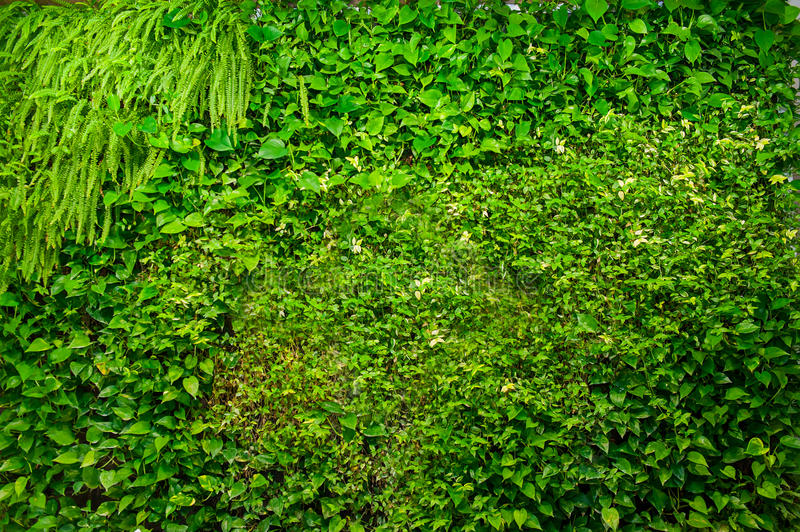 Green wall of different deciduous plants in the interior decoration. Beautiful vivid green leaf wallpaper and environment scene. Green wall of different stock photo