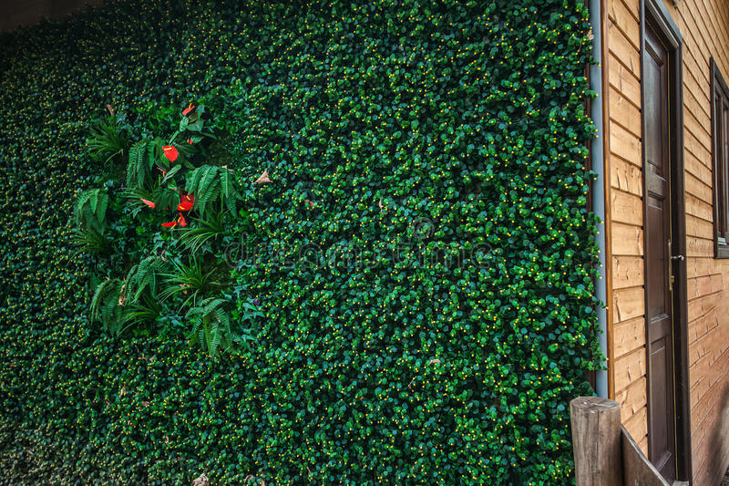 Green wall for ECO wooden house outdoor isolation technology. Eco green wall for the wooden house technology royalty free stock images