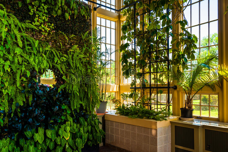 Green wall in the Howard Peters Rawlings Conservatory, in Druid royalty free stock photography