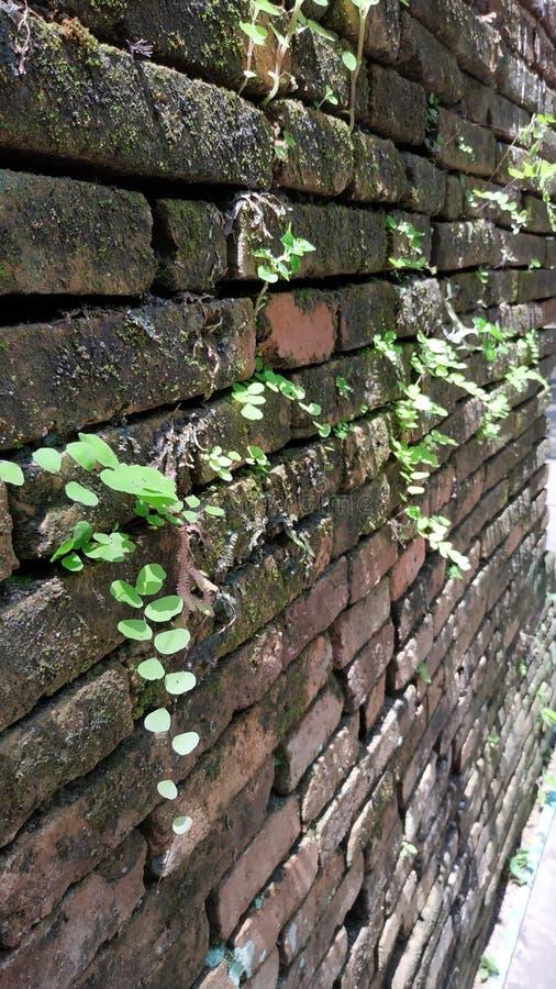 Green wall nature greenwall natural. Greentree wallgreen wall royalty free stock images