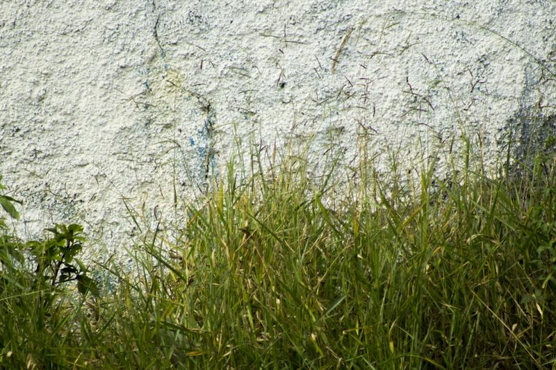 Green and Wall, nature and urban royalty free stock image