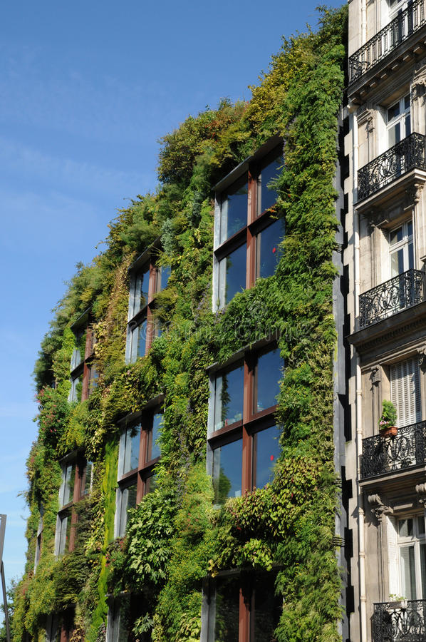 Green wall in Paris stock photography