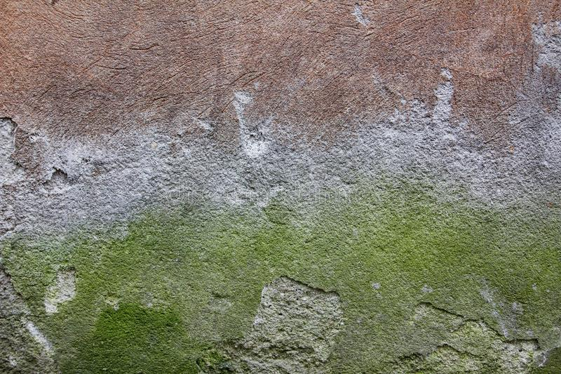 Green, Wall, Texture, Grass royalty free stock image