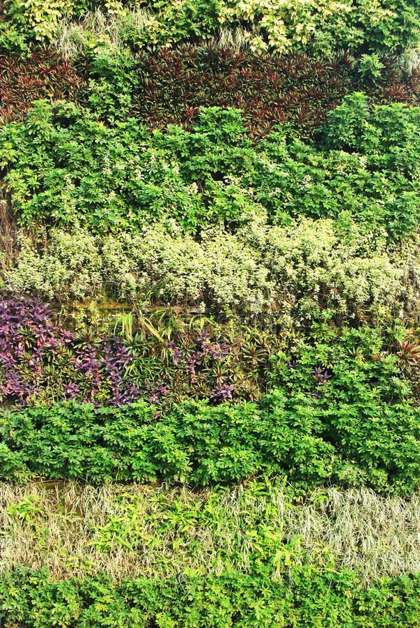 Download Green Wall Vertical Garden Stock Photo. Image Of Green   39258976