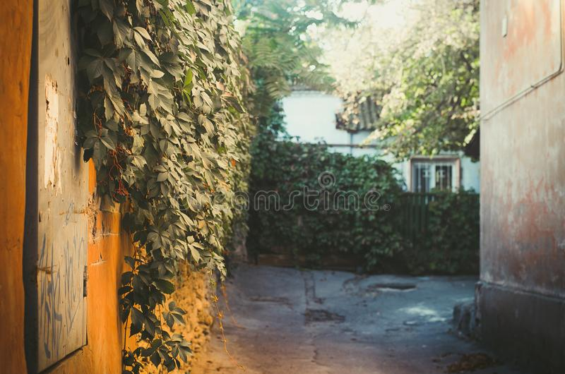 Green wall, view of the courtyard, Kherson. Old buildings countryard royalty free stock images