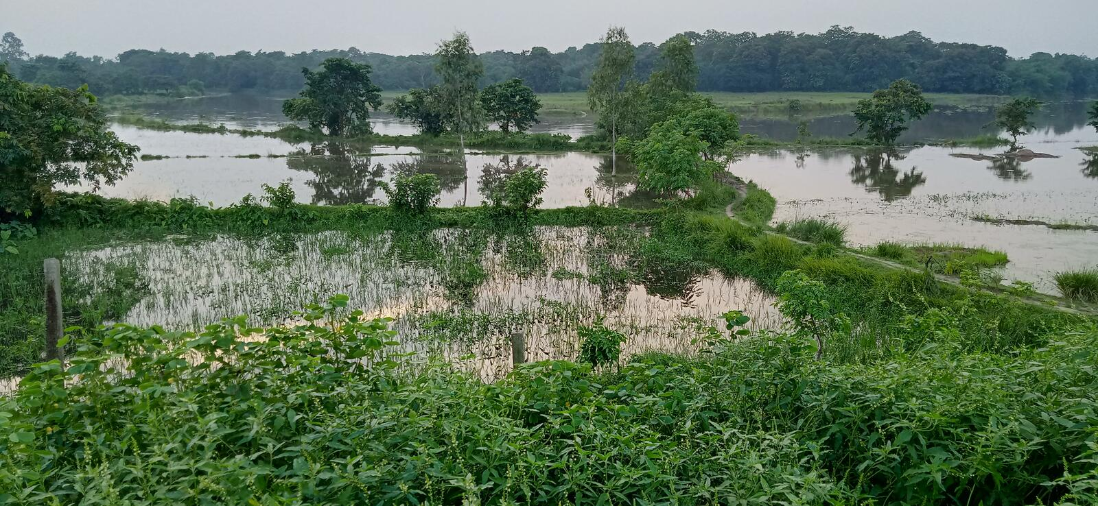Green water filled landscape trees flooded stock image