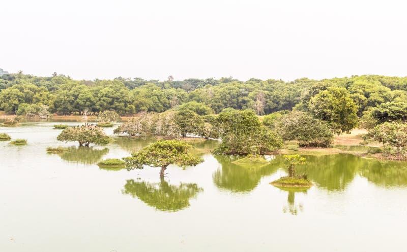 Green water lake royalty free stock image