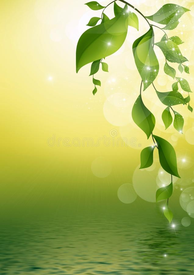 Green, Water, Leaf, Branch royalty free stock photography