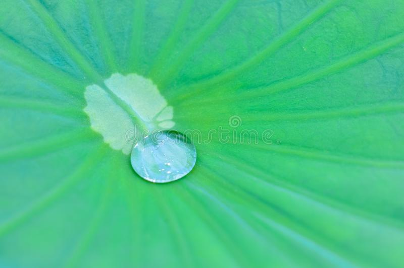 Green, Water, Leaf, Dew royalty free stock photos