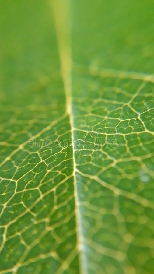 Green, Water, Leaf, Spider Web stock image