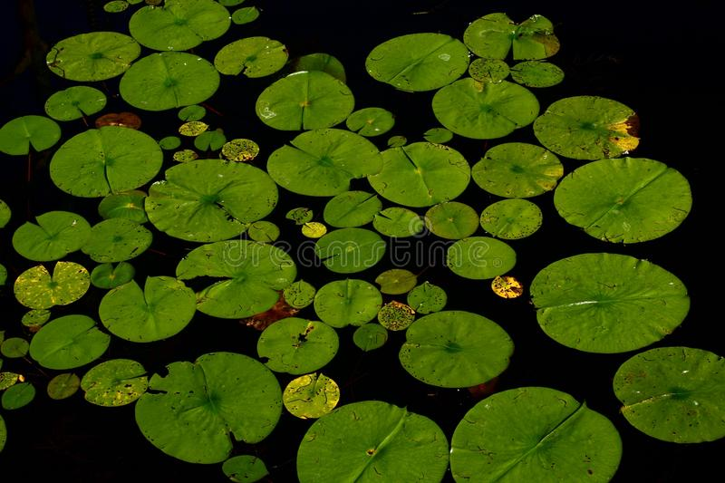 Green, Water, Plant, Leaf royalty free stock photo