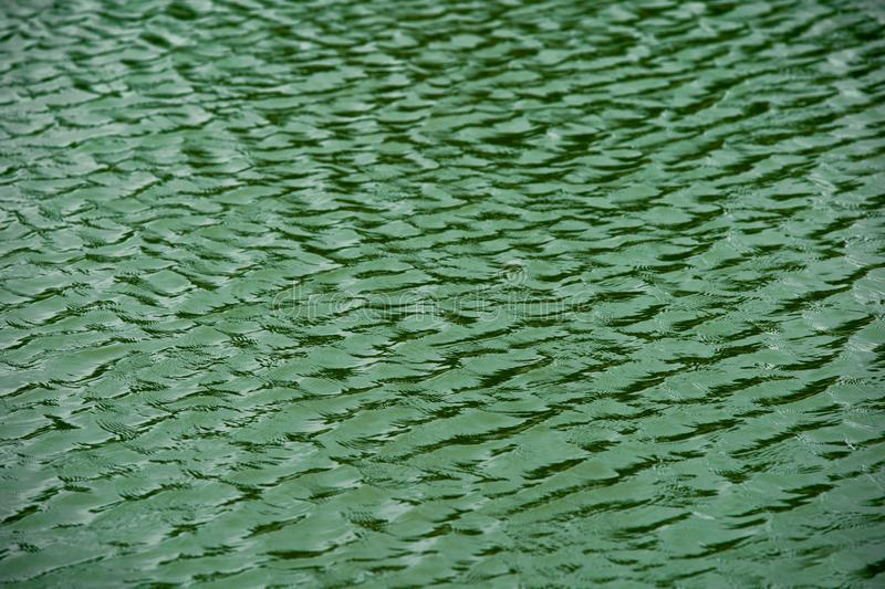 green water surface By wind.Water surface ruffled by light wind with small waves running diagonally, with reflections and royalty free stock photography
