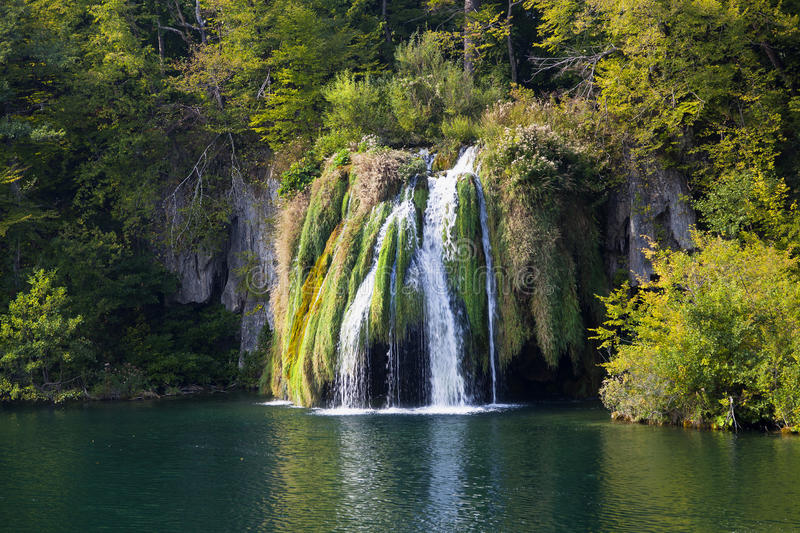 Download Green waterfall stock image. Image of leaves, motion - 24565127