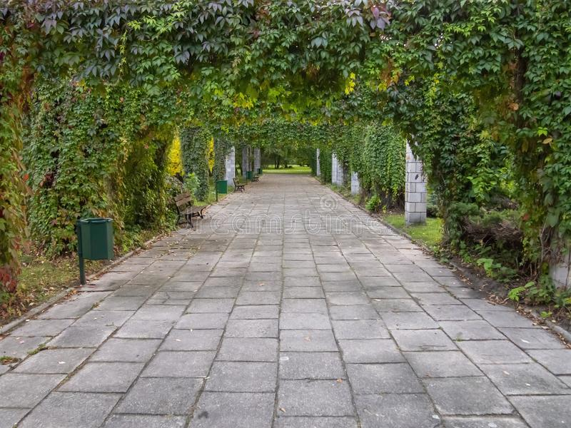 Green way perspective plant tunnel. Summer time grown up plants create natural green way perspective plant tunnel stock images