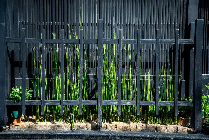 Green weeds garden in a mininal space. Green weeds pocket garden growing in an extremely narrow space between a wooden fence and a house external wall. Japanese