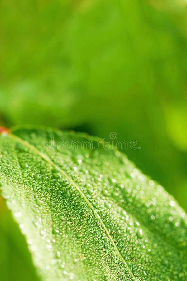 Free Green Wet Leaf Background Royalty Free Stock Image - 5942566