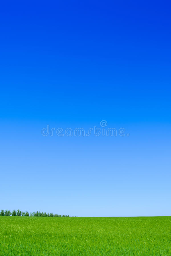 Green Wheat Field and Blue Sky. Landscape Background. With Space for Text stock photo
