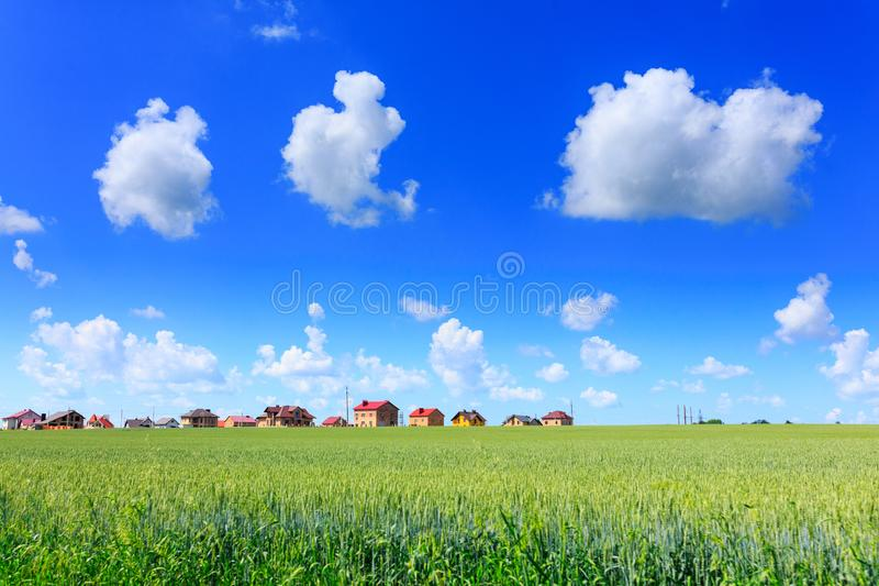 Green wheat in the field. Construction of residential cottages i stock photography