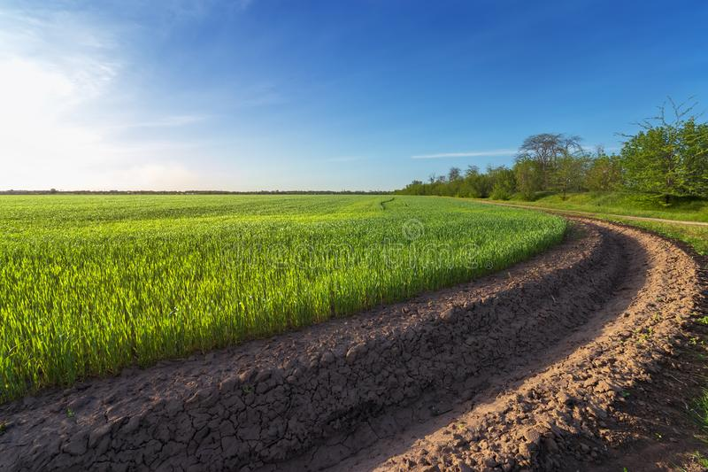 Green wheat field near irrigation canal royalty free stock images