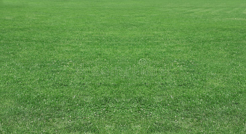 Green wheat on a grain field grass royalty free stock photography