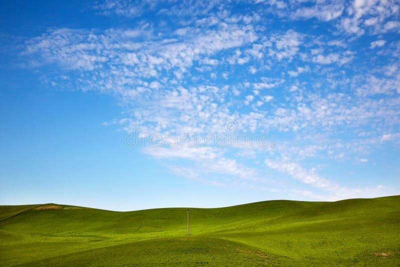 Green Wheat Grass Blue Skies Palouse Washington royalty free stock photo