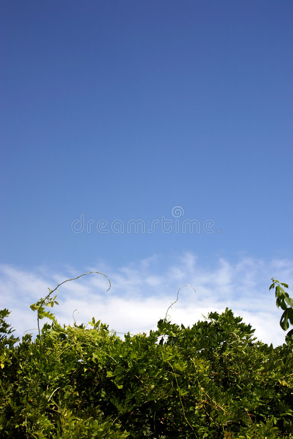 Download Green white & blue 3 stock photo. Image of cloud, foliage - 26528