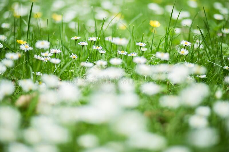 Green and White Flower stock photography