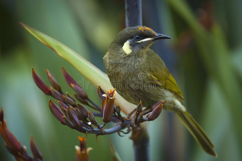 Green and White Small Bird Perching on Red Petaled Flower royalty free stock photography