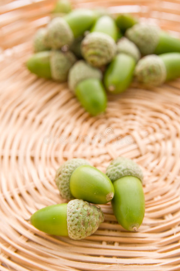 Download Green whole acorns stock photo. Image of healthy, edible - 18115474