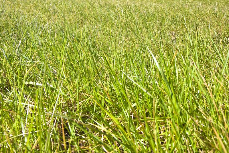 Green wild grass field background - full frame shot.  stock photography