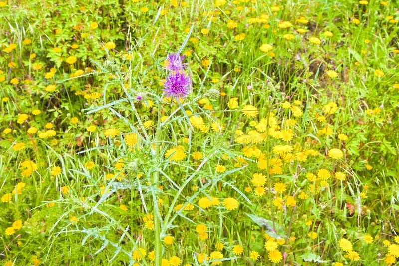Green wild grass field - full frame shot royalty free stock image