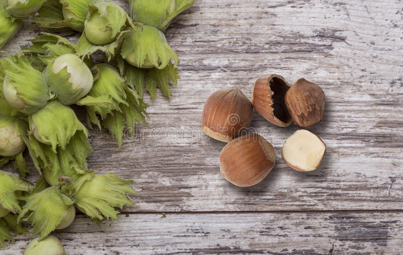 Green wild hazelnut royalty free stock photography