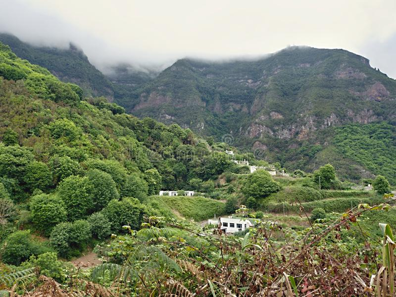 The green and wild high altitude in the north of the Canary Island Tenerife, over Los Realejos stock images