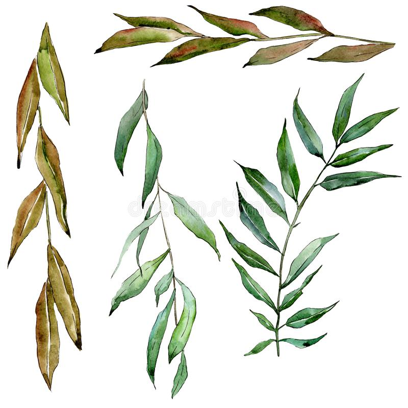 Green willow branches. Watercolor background illustration set. Isolated branch illustration element. royalty free illustration